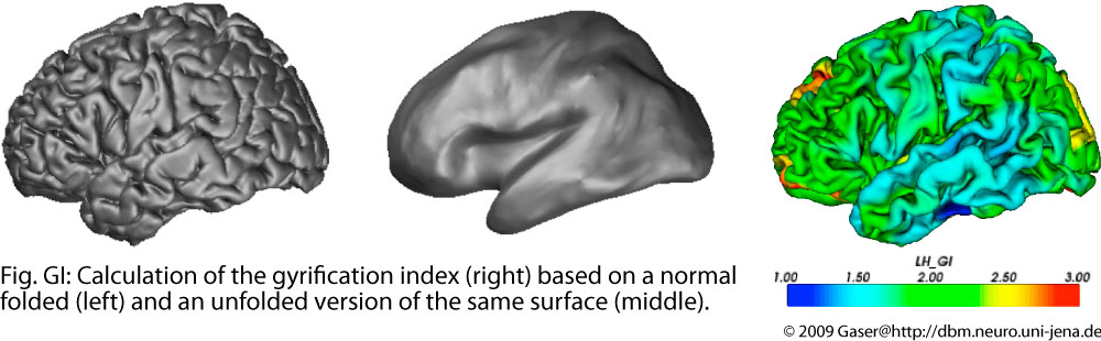 Gyrification And Cortical Measures At Structural Brain Mapping Group